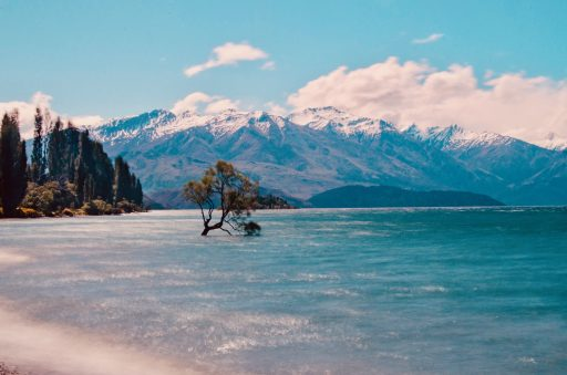 That Wanaka Tree